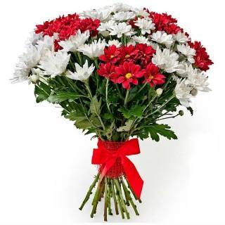 Букет из 19 бело-красных хризантем