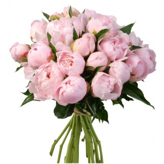 Букет из 25 нежно-розовых пионов