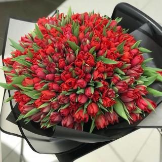 Букет из 151 красного пионовидного тюльпана