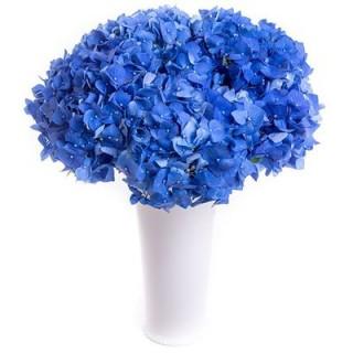 Букет из синих гортензий