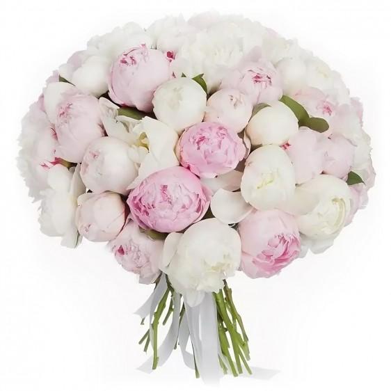 Букет из 55 бело-розовых пионов