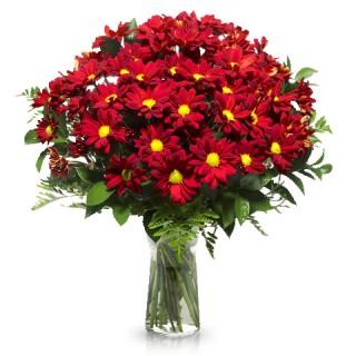 Букет из 15 красных хризантем