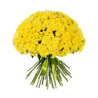 Букет из 35 жёлтых хризантем
