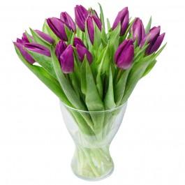 Букет из 15 фиолетовых тюльпанов