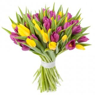 Букет из 49 жёлто-фиолетовых тюльпанов