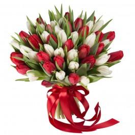 Букет из 49 бело-красных тюльпанов