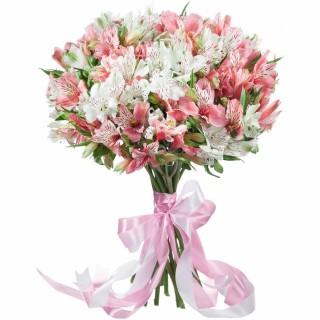 Букет из 19 бело-розовых альстромерий