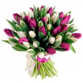 Букет из 49 бело-фиолетовых тюльпанов