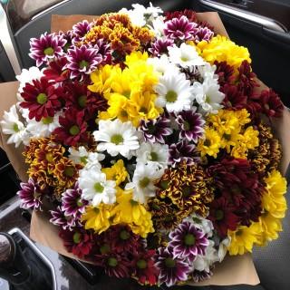 Букет из 25 хризантем в пяти оттенках