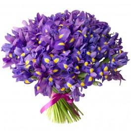 Букет из 101 фиолетового ириса