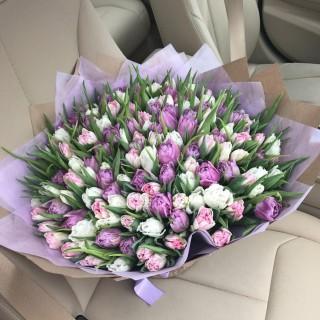 Букет из 151 пионовидного тюльпана