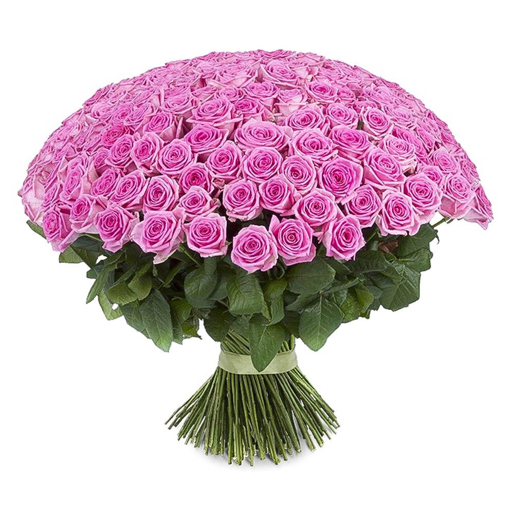 посадки фотографии больших букетов роз сегодня