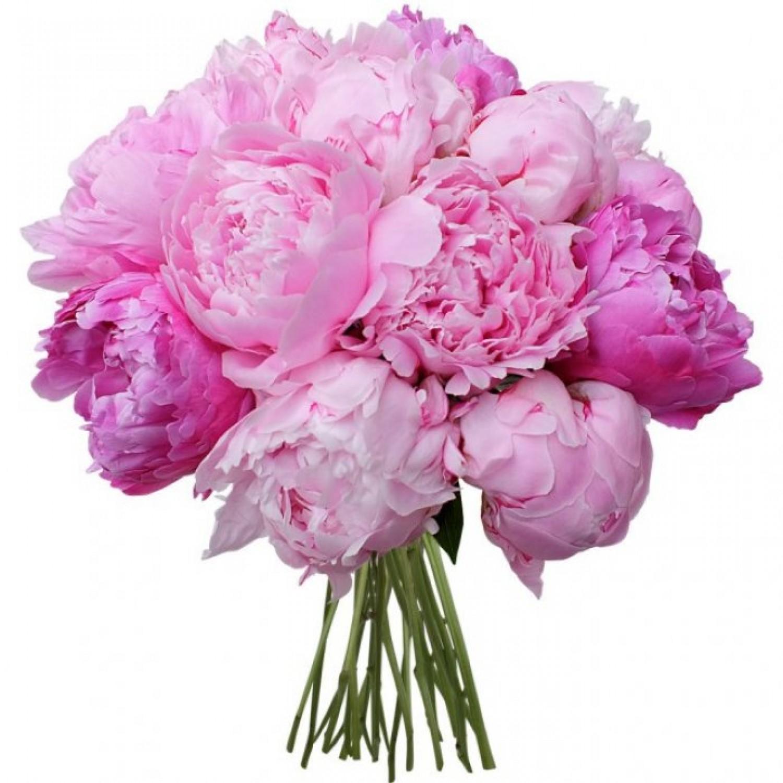 Букеты цветов картинки пионы